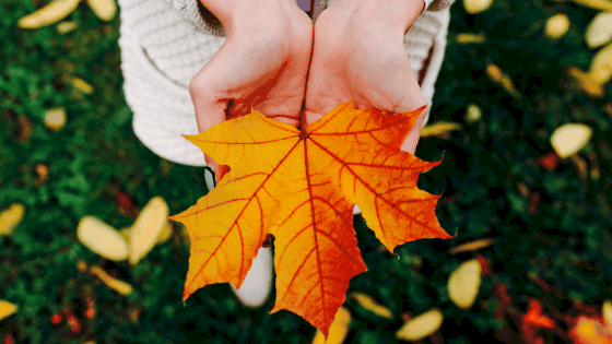 image shows hands holding a leaf to demonstrate the intricacy and reflect on intercultural communication